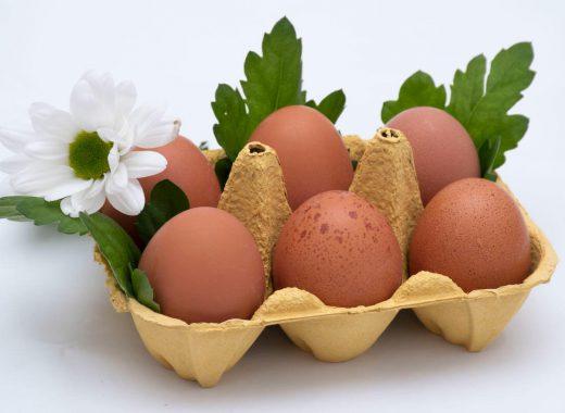 Media docena de huevos con hojas y margarita